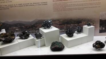 Un_giorno_al_Museo_di_Storia_Naturale_di_Pisa