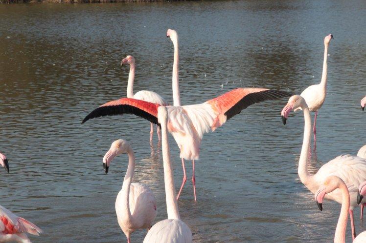 Cosa_fare_in_Camargue_Una_gita_al_Parc_Ornithologique_de_Pont_de_Gau (163)