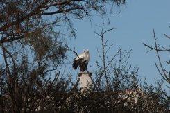 Cosa_fare_in_Camargue_Una_gita_al_Parc_Ornithologique_de_Pont_de_Gau (202)